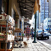 Cat walking down Chinatown sidewalk Honolulu Hawaii