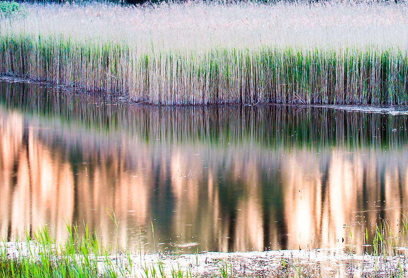 Fowlmere Nature Reserve, Cambridgeshire