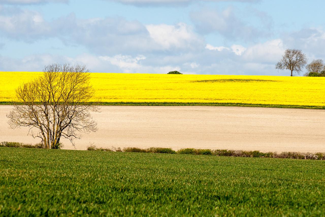 Rape Fields, Cambridgeshire, Bulb Interiors Ltd