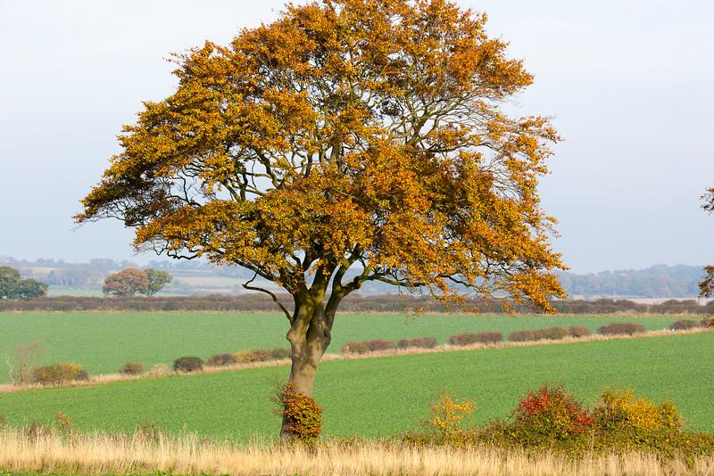 Thornham, Norfolk