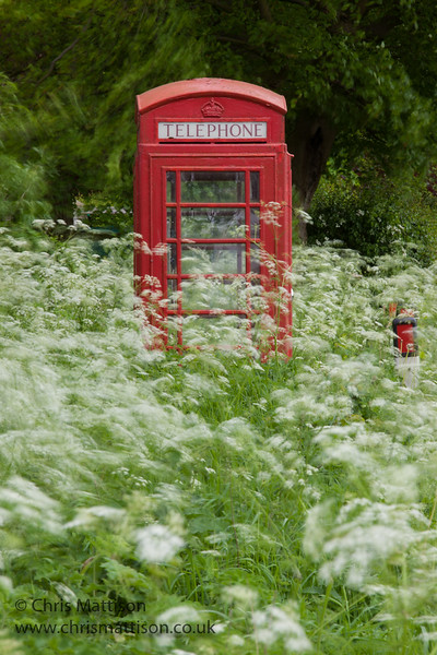 Rural telephone kiosk surrounded by cow parsley, on a breezy day