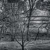 Museum Through The Trees