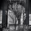 The Tree Under The Bridge