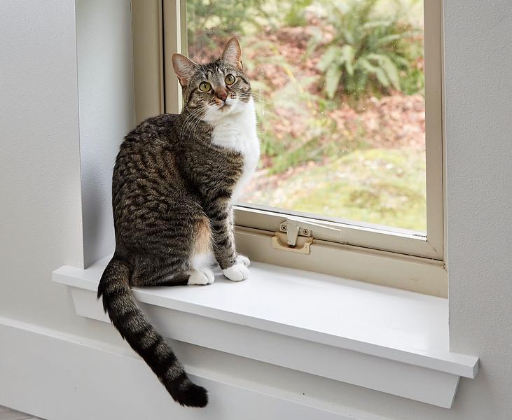 Cat posing in new window of bathroom remodel.