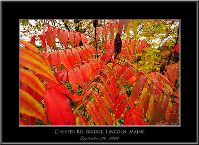 2008-09-28-15022 Frame