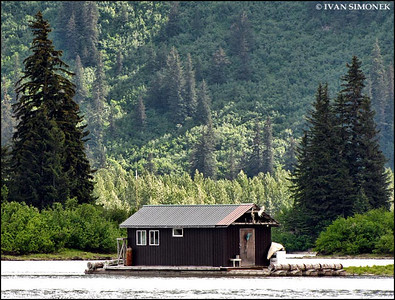"""NOBODY HOME"",Shakes Slough,Alaska,USA."