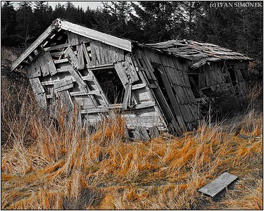 """HARDLY STANDING"",Kasaan,Alaska,USA."
