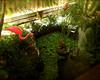 Florida Water Garden (by Jon Gorr)