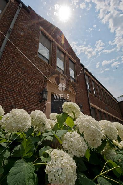 MLC Hydrangeas and WCC by wpekrul