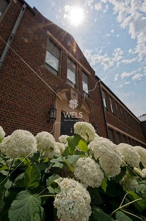 MLC Hydrangeas and WCC by wpekrul