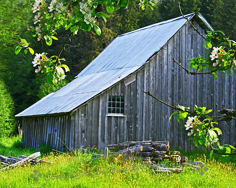 The Old Gray Barn