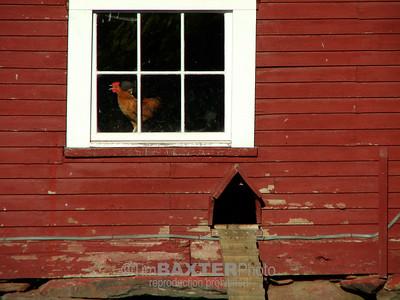 Vermont Chicken