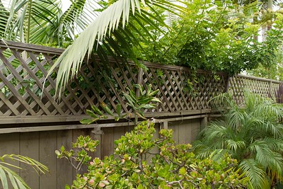 Top fence leaning under weight of plants