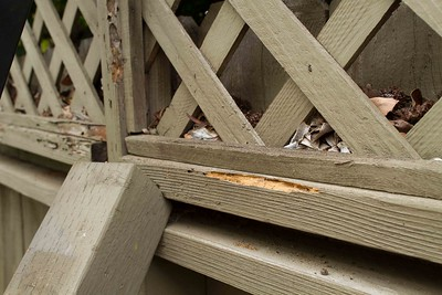 termite damage, propping fence up after winds