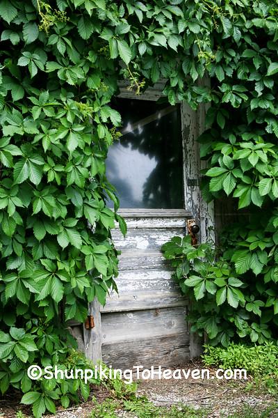 Vine-covered Door of Old Garage, Muscatine County, Iowa