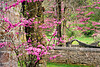 Blossoming Redbud and Stone Walls, Lawrence County, Indiana