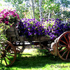 Carriage of Flowers