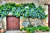 Viney Doorway