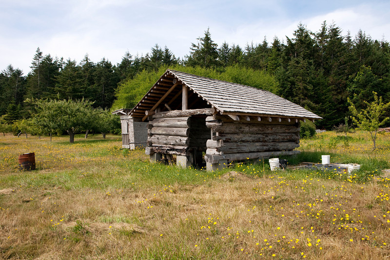 An old barn, made of logs chiked with mud, is being rebuilt on a farm on a remote island in Washington State.