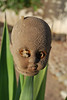 the bizarre doll head - got its charred surface from either sun exposure or a fire<br /> found it in the yard