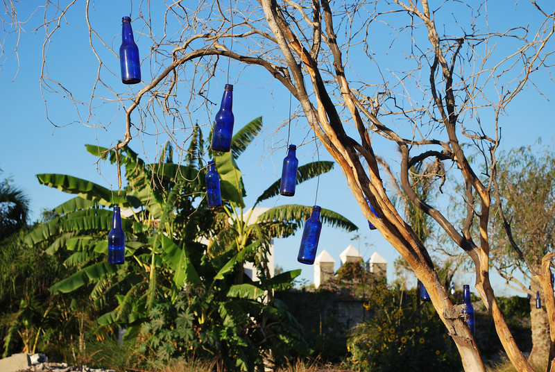 """one of my bottle trees <br /> each bottle represents a happy moment<br /> I find theses """"happy moment"""" blue bottles at the beach<br /> Mexicans love to have sex at the beach (in the car)<br /> to impress their date of the day, they buy expensive looking beer<br /> what looks more expensive than beer in  a blue bottle?<br /> and as proud Mexicans they throw their trash out of the window<br /> good for me - that way, I can collect happy moments<br /> and then hang them up in my trees"""