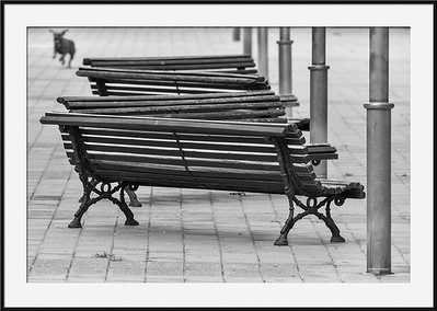 Benches and Dog