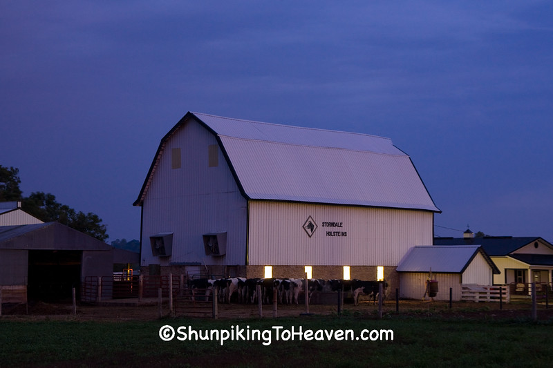 Morning Milking Time, Richland County, Wisconsin