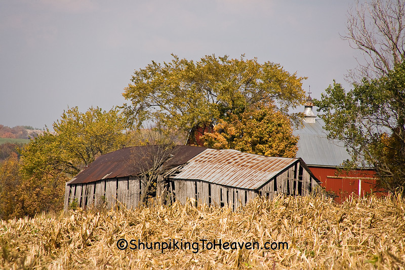 Collapsing Tobacco Barns, Richland County, Wisconsin