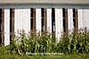 Sweet Corn and Tobacco Barn, Dane County, Wisconsin