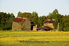Dilapidated Tobacco Barns, Pitt County, North Carolina