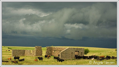 Cattle gather near the remains of a stone barn in Waubaunsee Co., Kansas before an impending storm