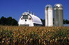 Large Gothic Dairy Barn - Waseca County
