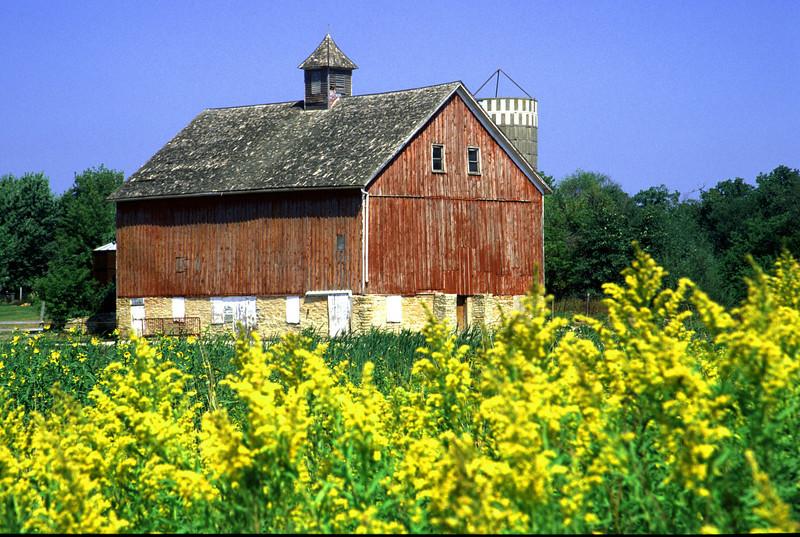 Goldenrod Barn - Goodhue Co.