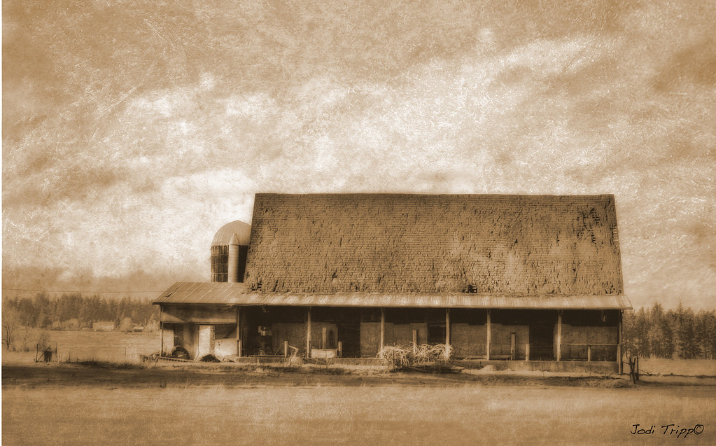 Sepia barn OLD