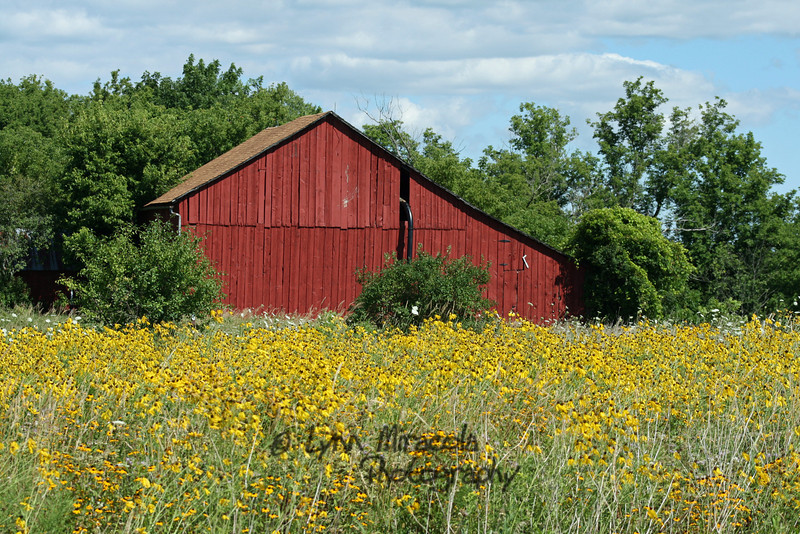 Red Barn and field of flowers