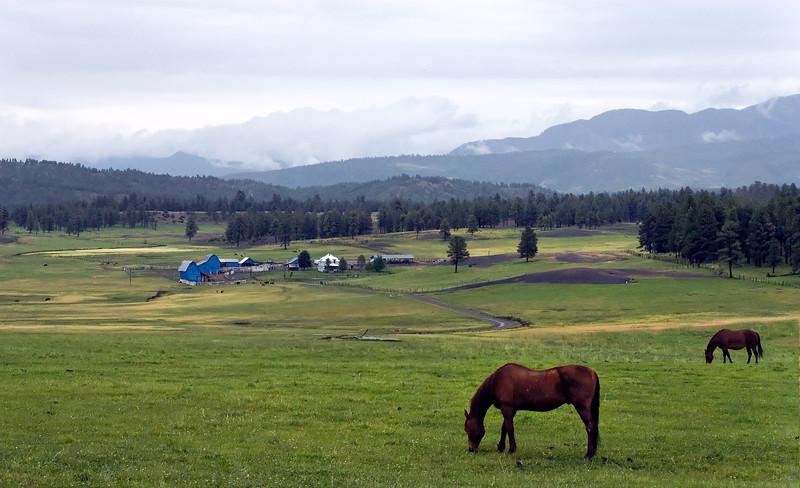 Horses & Blue Barns