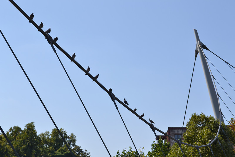 Bird Hangout