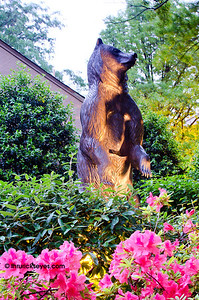 A statue of the mascot of the Belmont Bruins keeping watch over the garden.