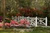 White bridge with azaleas