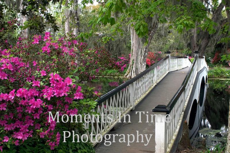 Whilte bridge at Magnolia