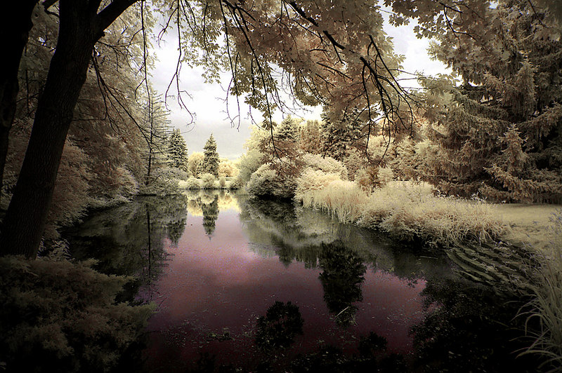Infrared photography - July 1, 2006