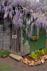 South Carolina, Wisteria