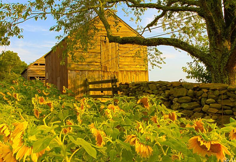 Buttonwood Barn