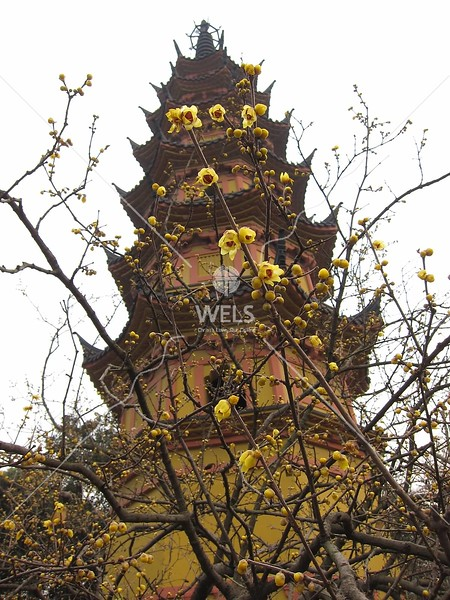 Pagoda with blossoms,  in SuZhou, JiangSu Province, China by kstellick