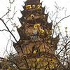 Pagoda with blossoms,  in SuZhou, JiangSu Province, China by kstellick