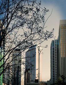 Charlotte_Tree&Buildings_352017