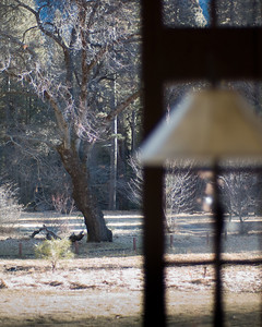 Yosemite, The Ahwahnee, February 2007
