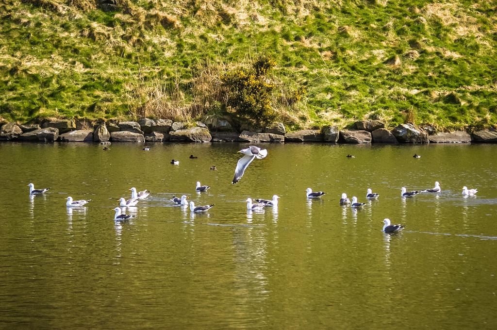 Dunsapie Loch, Holyrood Park, Edinburgh