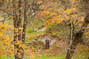 Root Cellar in Autumn, Richland County, Wisconsin