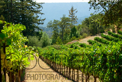 0362_d800b_Byington_Winery_Los_Gatos_Commercial_Photography